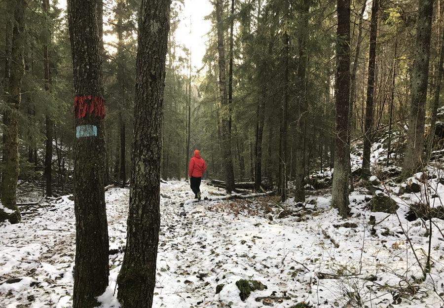 Snøfattig vinter
